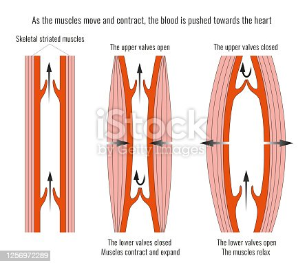 istock Heart Valves 1256972289