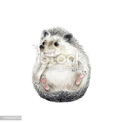 istock hedgehog cute animal on a white background, watercolor illustration 1222015724