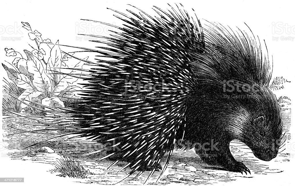hedgehog royalty-free hedgehog stock vector art & more images of animal