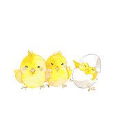 Hello!\nFine chicks just born