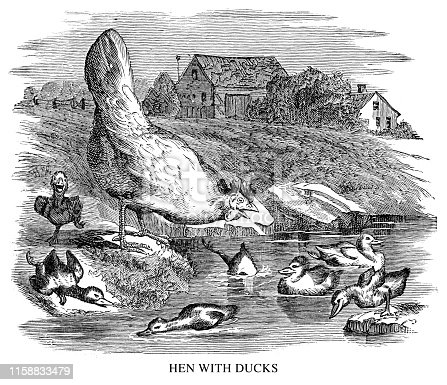 Hen with ducks - Scanned 1897 Engraving