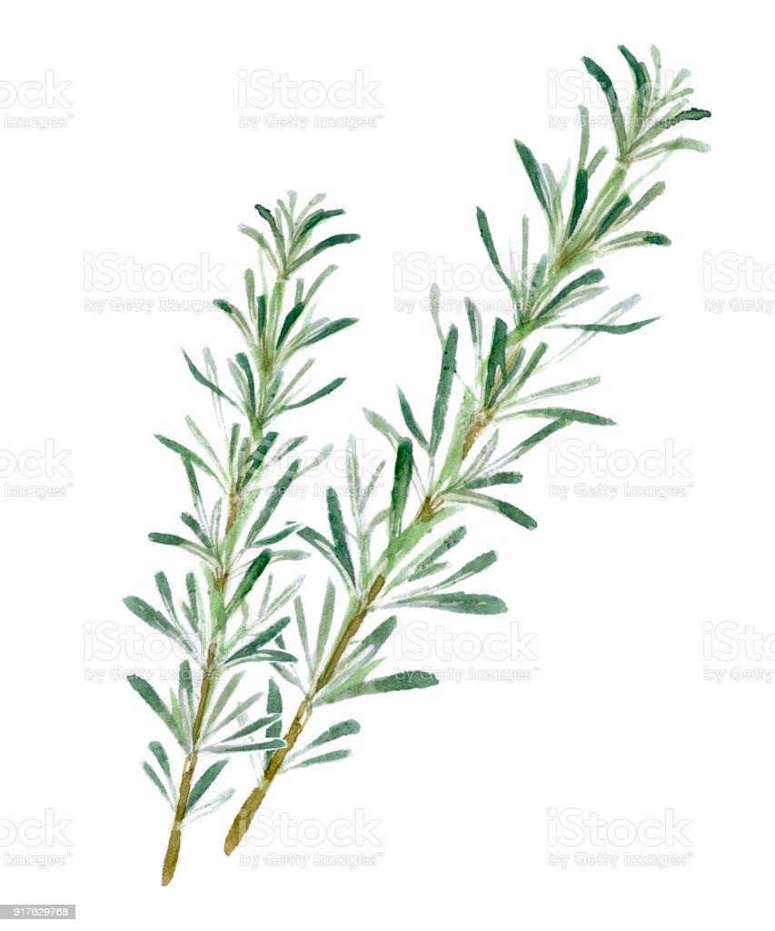 Com ervas - ilustração de arte em vetor