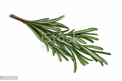 An illustration of a sprig of Rosemary.