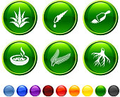 Herbal medicine icon set