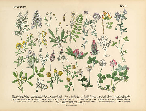 Herbs anb Spice, Victorian Botanical Illustration vector art illustration