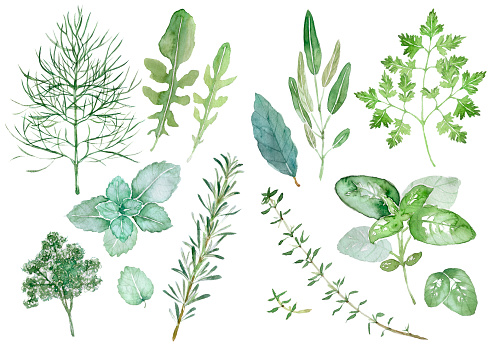 Herbs Stock Illustration - Download Image Now