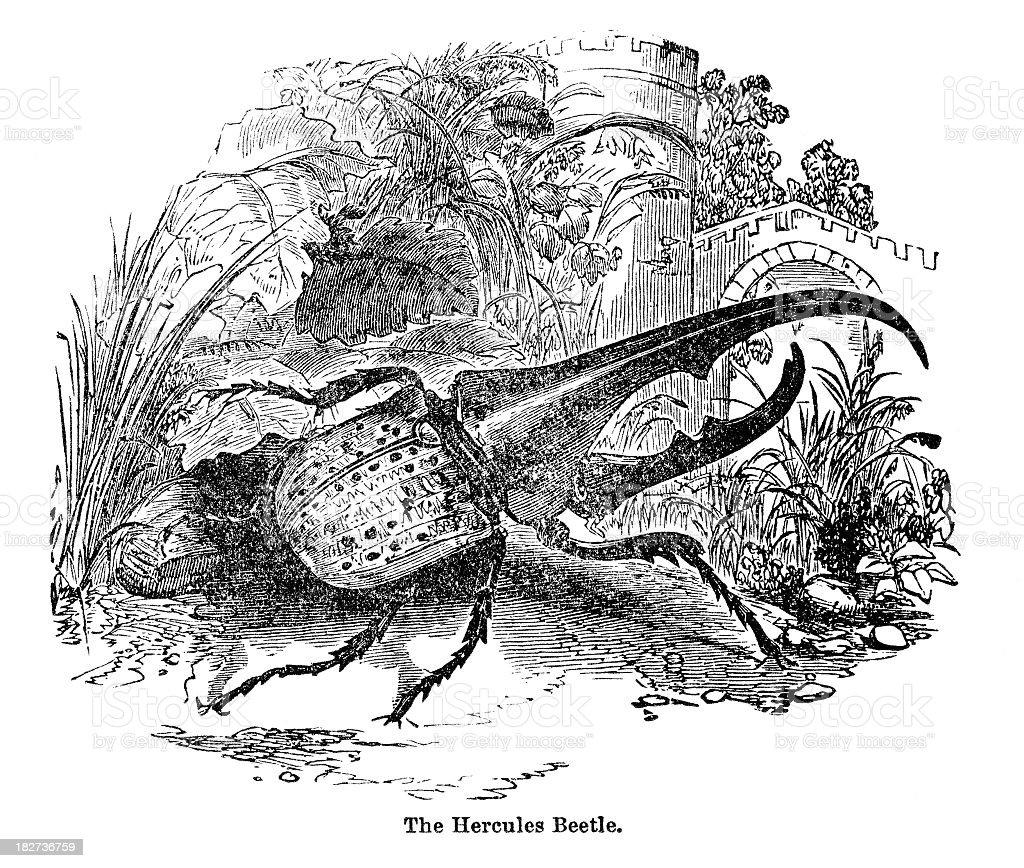 Ilustración de Escarabajo Hércules y más banco de imágenes de 1880 ...