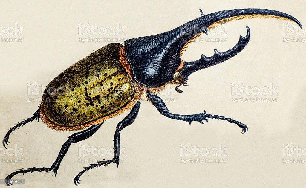 Ilustración de Escarabajo Hércules O Dynastes Hercules Insecto ...