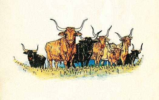 Herd of longhorn cows at meadow