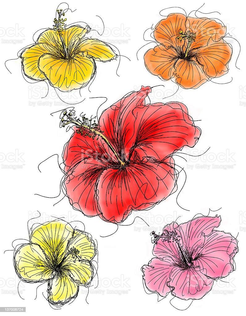Hibiscus flower sketches stock vector art more images of art hibiscus flower sketches royalty free hibiscus flower sketches stock vector art amp more images izmirmasajfo