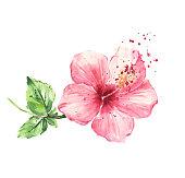ハイビスカスの花、水彩画