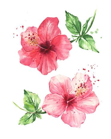 Hibiscus flowers, Watercolor painting