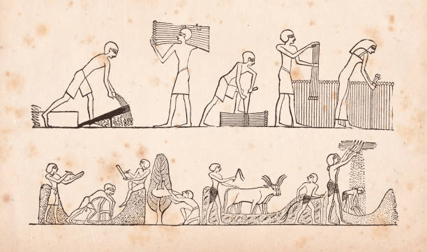 "Hieroglyphics of Egypt farmers milling cutting millet working the field Steel engraving Egypt farmers milling millet Drawing after Wilkinson Original edition from my own archives Source : ""Calwer Bibellexikon"" 1885 ancient egyptian culture stock illustrations"