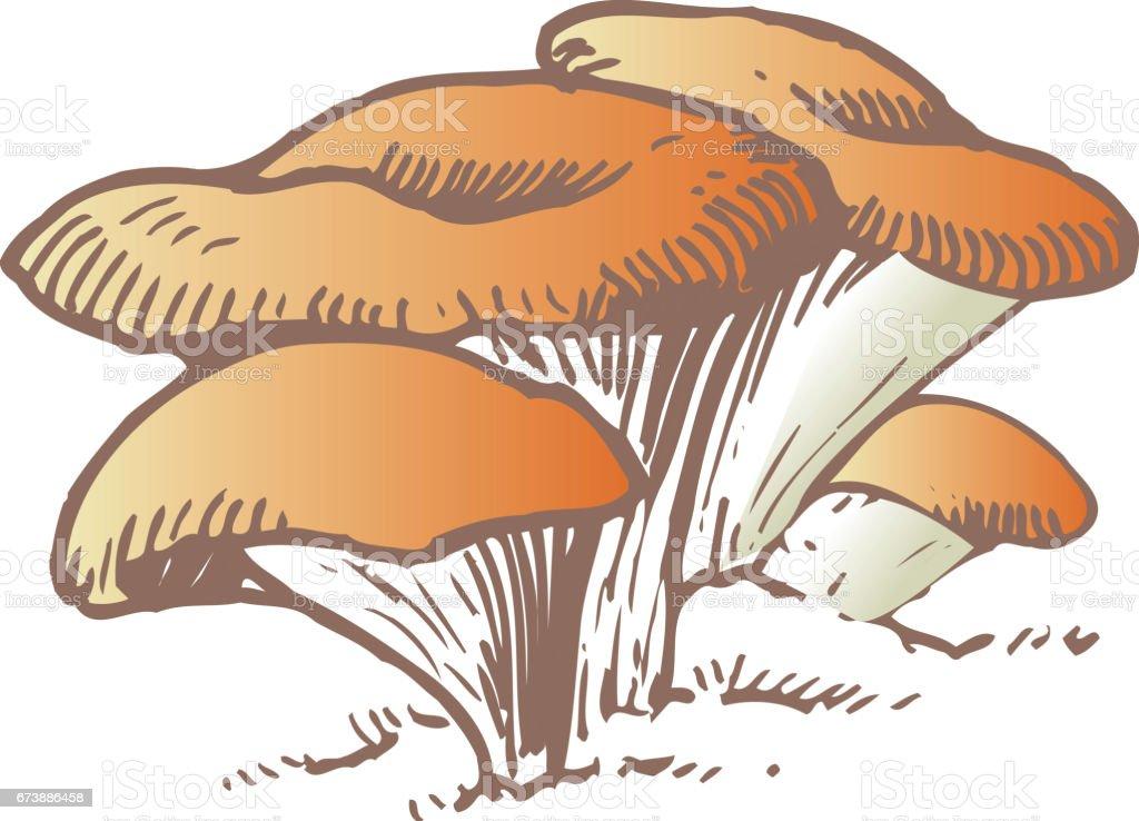 Hiramatsu Takeshi hiramatsu takeshi - arte vetorial de stock e mais imagens de cogumelo royalty-free
