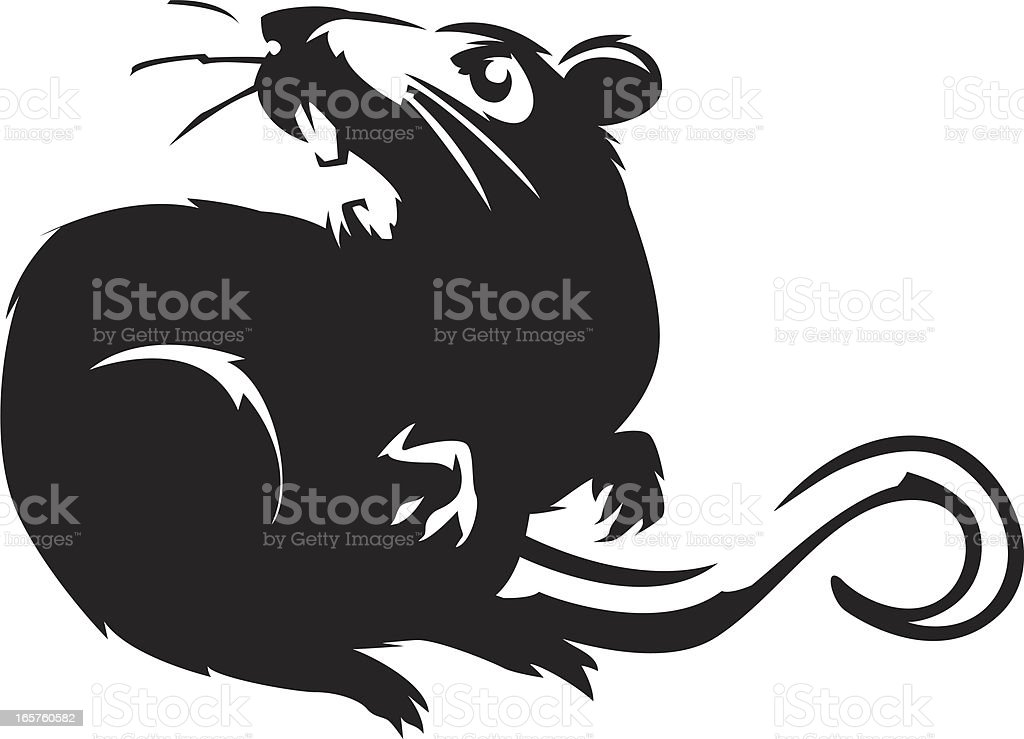 hissing rat royalty-free hissing rat stock vector art & more images of anger