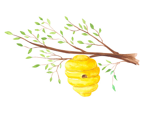 Hive on a branch of a tree isolated on a white background. Watercolor beehive clipart. Hand-drawn honey bee house illustration in cartoon style. Colorful nest print. Green tree branch.