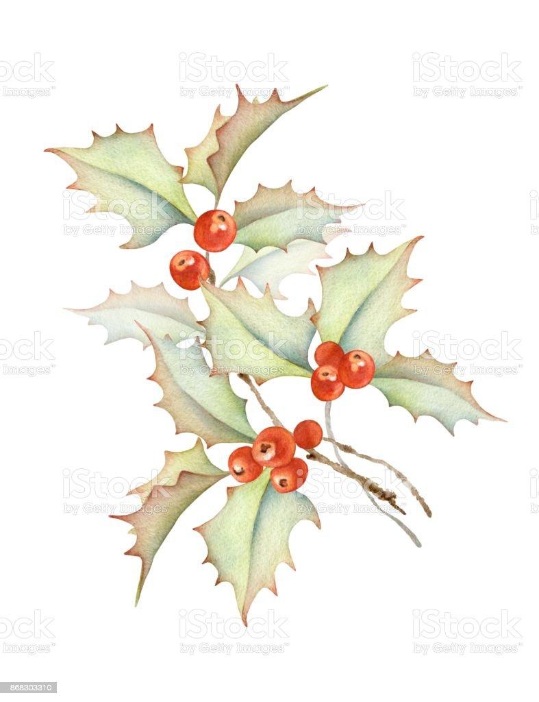 Holly berries Branch vector art illustration