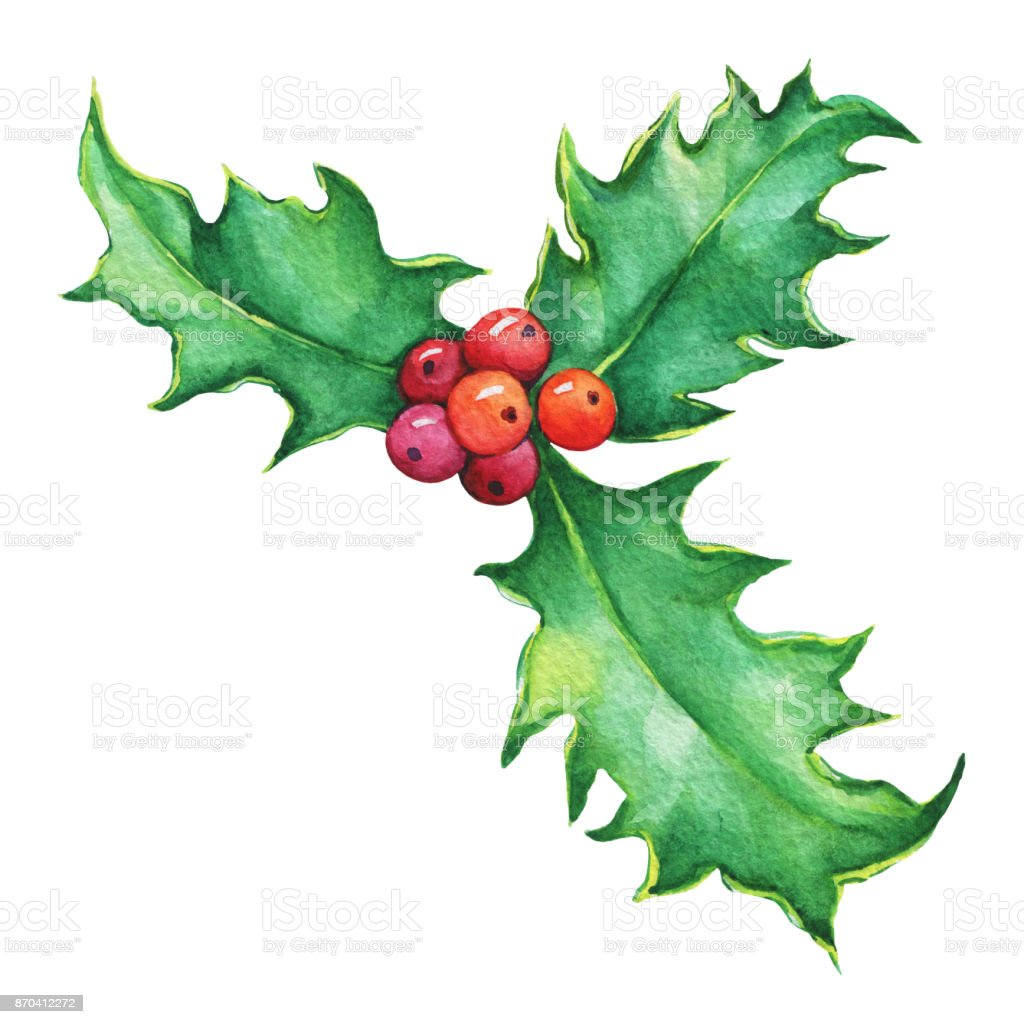 Holly twig with leaves and berries christmas decoration for greeting holly twig ilex christs thorn with leaves and berries christmas decoration for stopboris Gallery