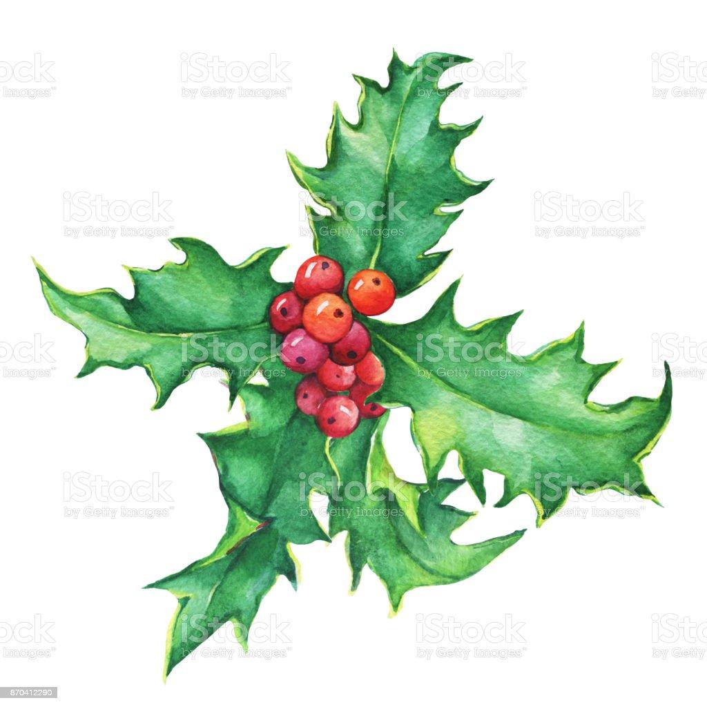 Rameau de houx avec les feuilles et les baies d coration de no l pour carte de voeux invitation - Decoration de noel avec du houx ...