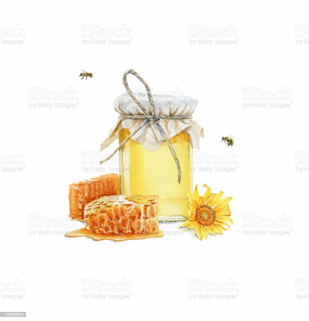 Honey, bee. Watercolor illustration vector art illustration