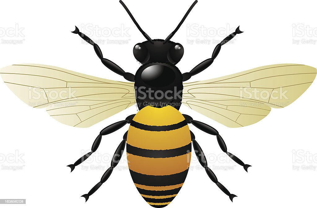 honey bumble bee insect vector art illustration