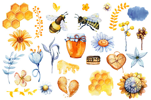 Honey set, bee and wasp, honeycomb, field herbs, flowers, jar, packaging for the product. Hand drawn watercolor illustration isolated on white background