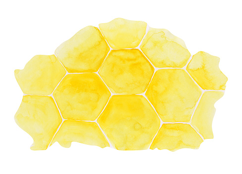 Honeycomb isolated on a white background. Yellow watercolor hexagon illustration. Honey bee hive clipart. Hand-drawn beekeeper print for your design. Cell wallpaper.