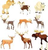 Hoofed Animals