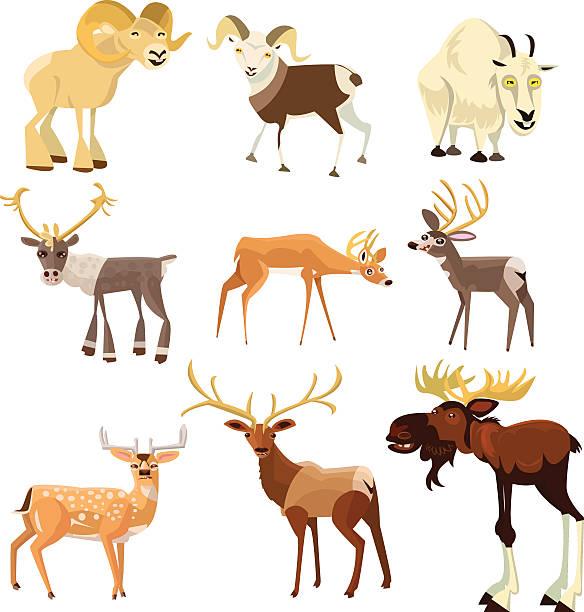 hoofed tiere - bergziegen stock-grafiken, -clipart, -cartoons und -symbole