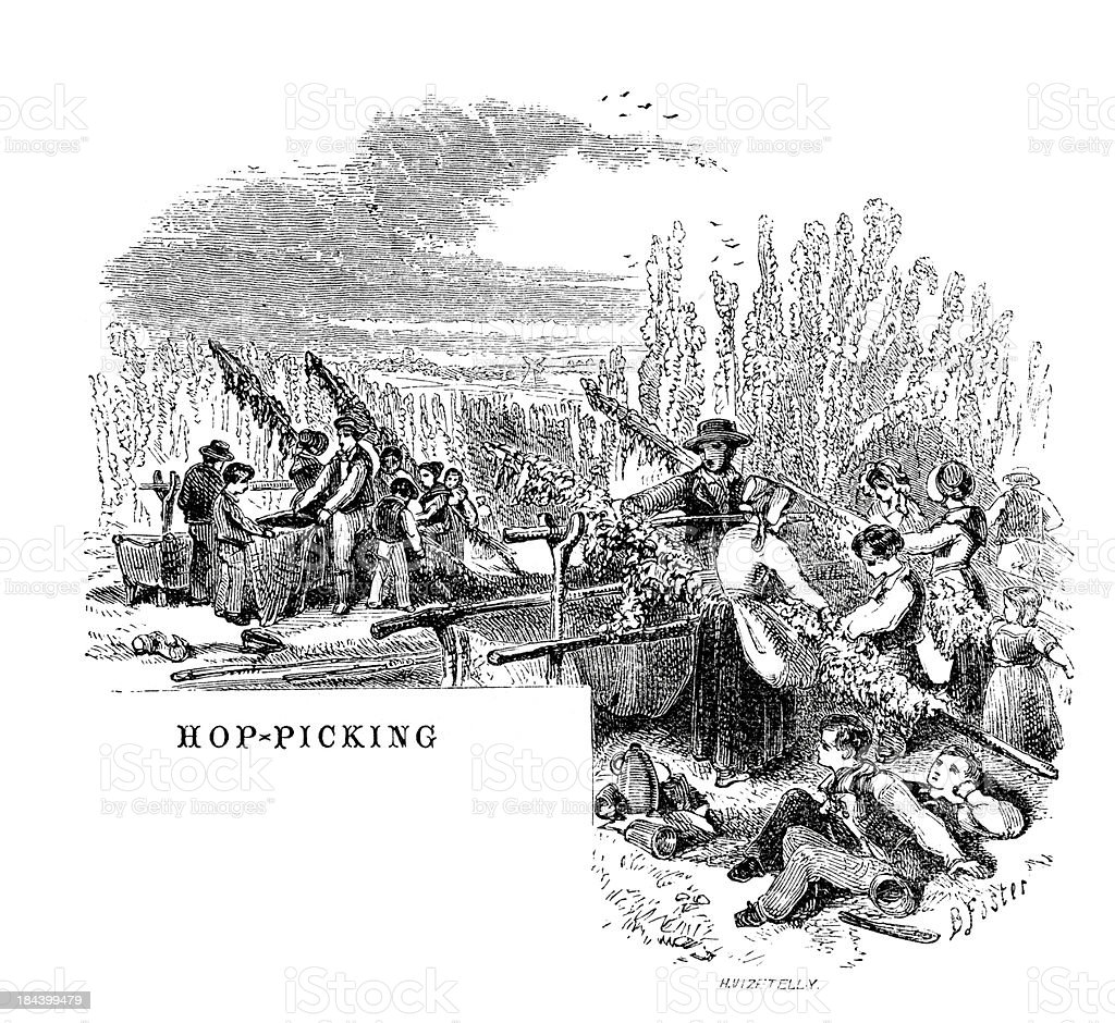 Hop picking royalty-free hop picking stock vector art & more images of 19th century