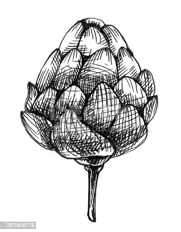 Hop plants. Monochrome vintage hand drawn hatching illustration isolated on a white background.