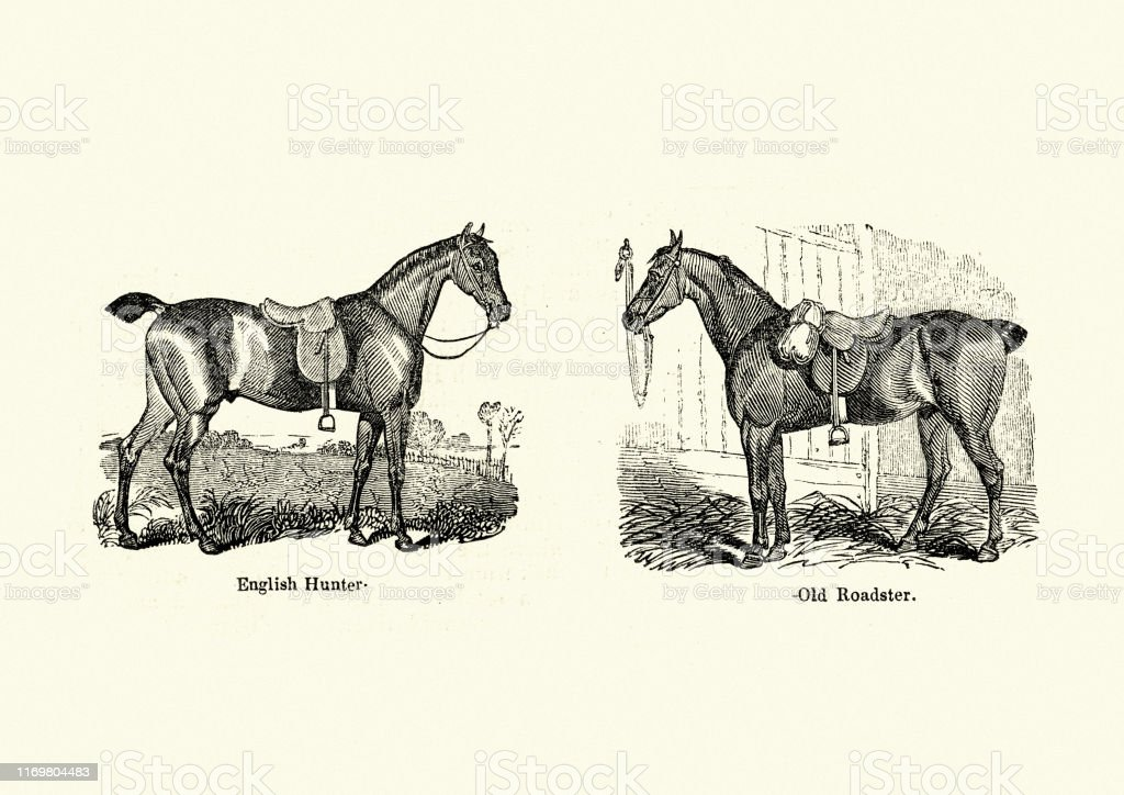 Horse Breeds English Hunter And Old Roadster Victorian Stock Illustration Download Image Now Istock