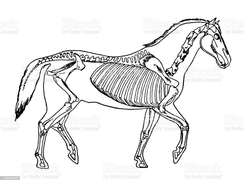 Horse royalty-free horse stock vector art & more images of anatomy