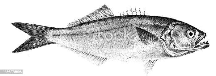Zoology of New York, or the New York fauna, De Kay, James E. (James Ellsworth), 1842