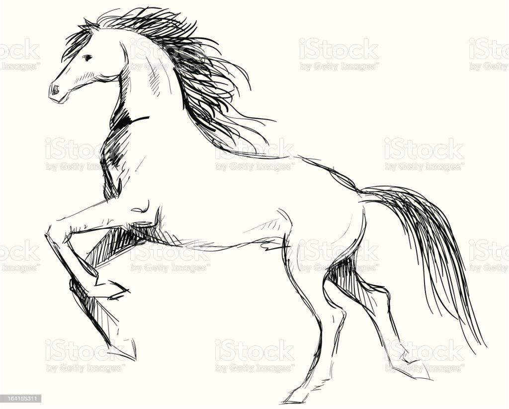 Horse Sketch Stock Illustration Download Image Now Istock