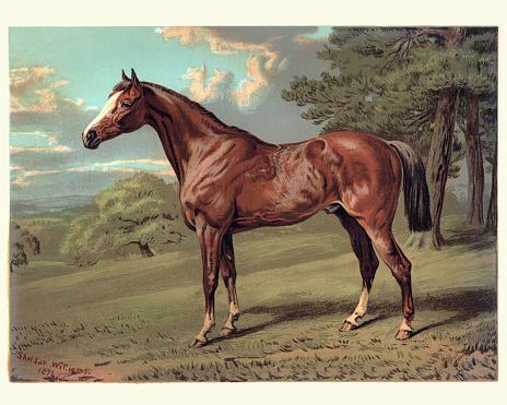 Vintage engraving of a Horse, Stilton a Hunter, 19th Century