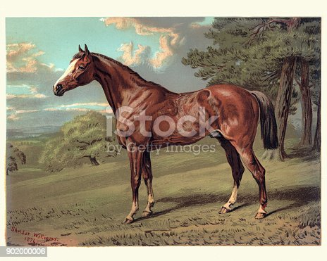 Vintage engraving of a Horse, Stilton a Hunter, 19th Century