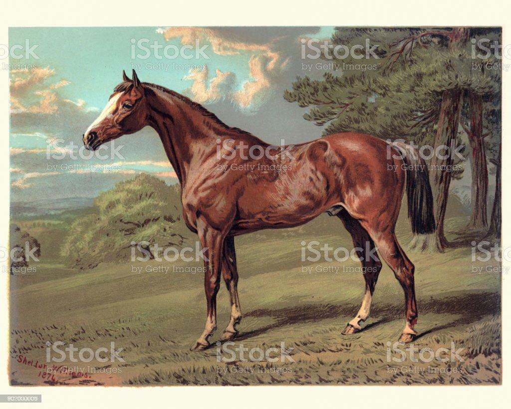 Horse, Stilton a Hunter, 19th Century vector art illustration