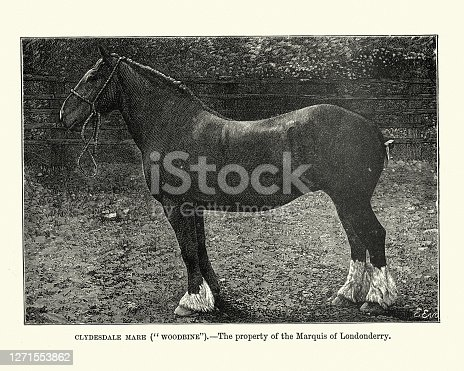 istock Horses, Clydesdale mare, Victorian, 19th Century 1271553862