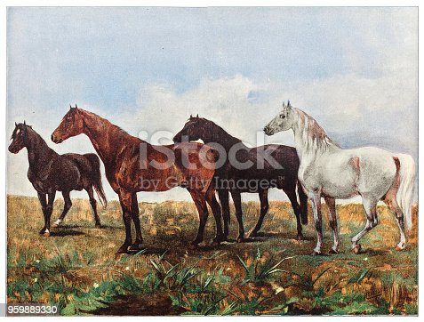 Illustration of a Horses