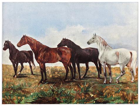 Illustration of a Horses