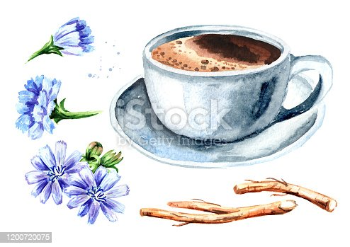 Hot Chicory drink in a cup with a flower and dried chicory roots set. Watercolor hand drawn illustration, isolated on white background