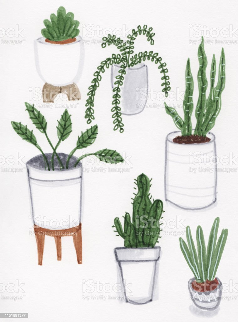 House Plants Marker Drawing Stock Illustration Download Image Now Istock