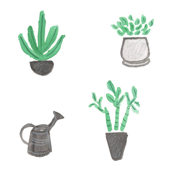 Houseplants and watering can vector art illustration