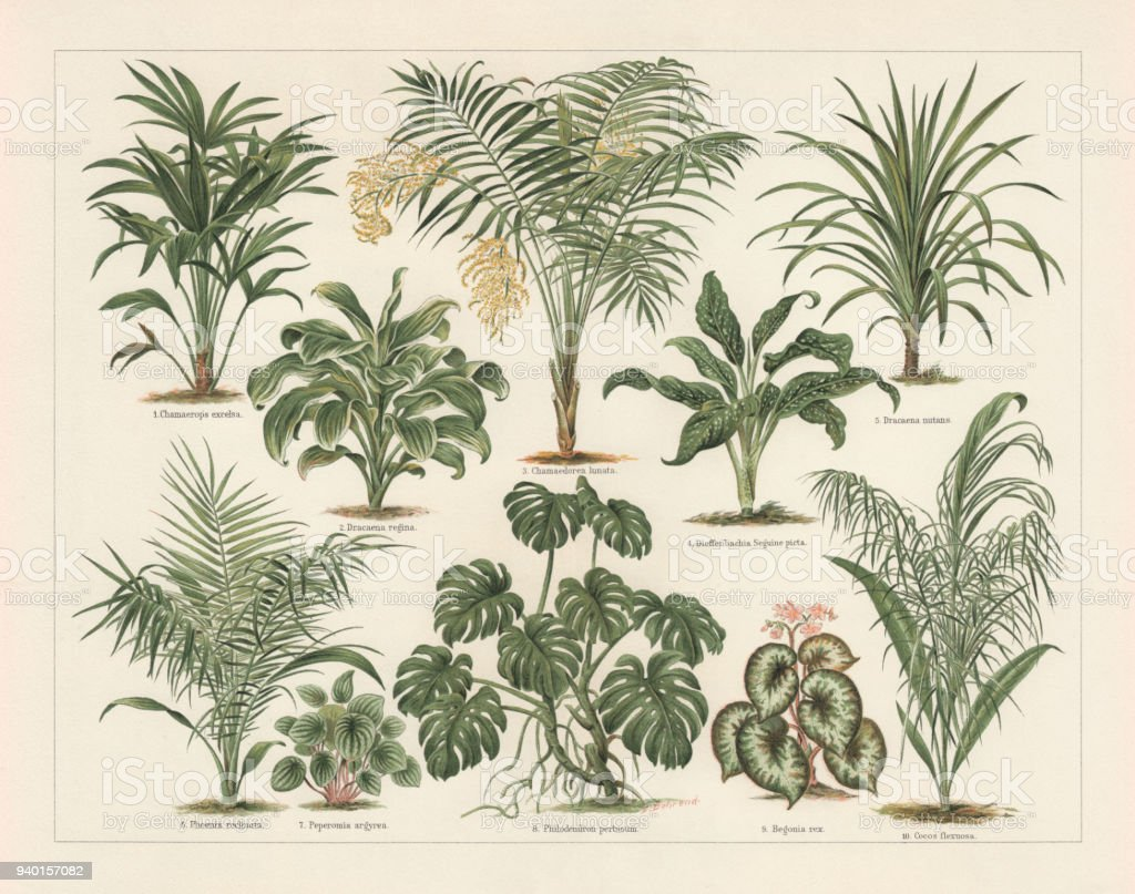 Houseplants, lithograph, published in 1897 vector art illustration