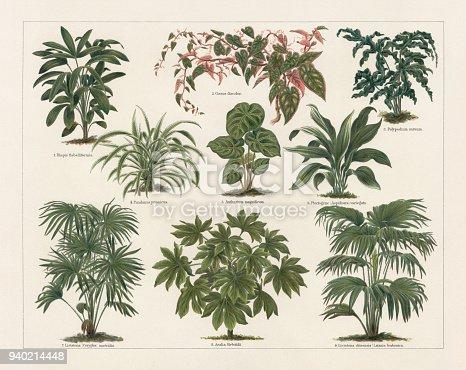 Houseplants: 1) broadleaf lady palm (Rhapis flabelliformis, or Rhapis excelsa); 2) Rex begonia vine (Cissus discolor); 3) Golden polypody (Polypodium aureum); 4) Variegated Dwarf Screw Pine (Pandanus javanicus); 5) Anthurium magnificum; 6) Aspidistra (Plectogyne Aspidistra variegata, or Aspidistra elatior); 7) cabbage-tree palm (Livistona Corypha australis); 8) Japanese aralia (Aralia Sieboldii, or Fatsia japonica); 9) Chinese fan palm (Livistona chinensis). Lithograph, published in 1897.