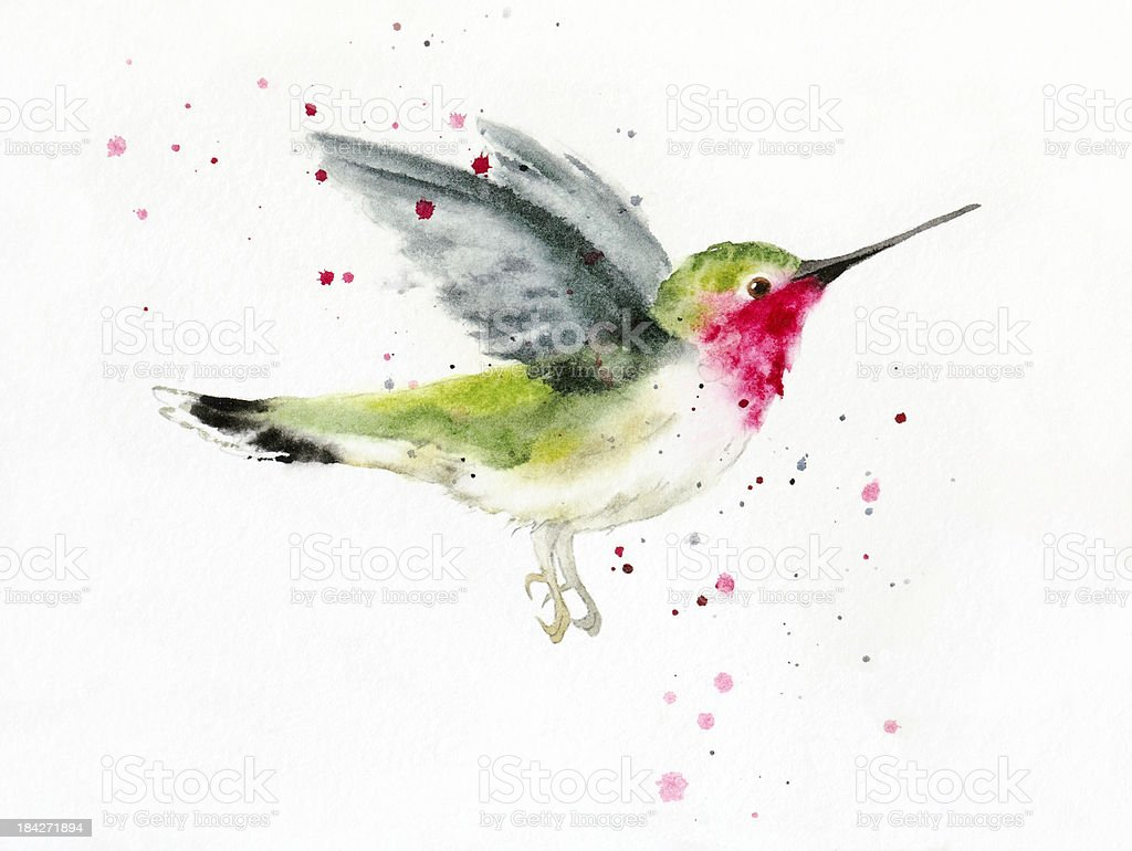 Hovering Hummingbird vector art illustration