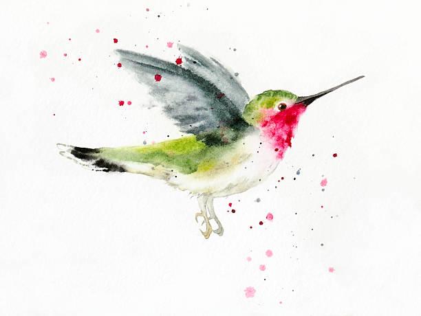 hovering hummingbird - hummingbird stock illustrations