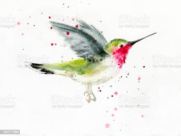 Hovering Hummingbird Stock Illustration - Download Image Now