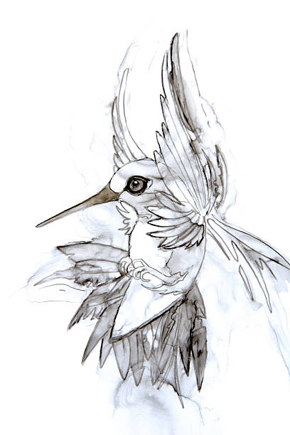 Hovering Hummingbird Watercolor Drawing vector art illustration